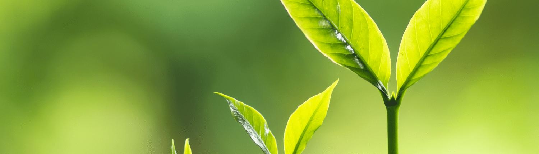 Flüchter & Partner, STS GbR - Wir fördern Wachstum